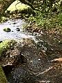 River Dart (44788744252).jpg