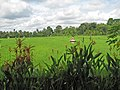 Rizières depuis Villa Tegal Sari (Ubud) - panoramio.jpg