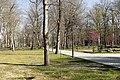 Road in the Zugdidi Botanical Garden.jpg