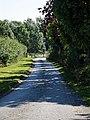 Road to Aythorpe Hall Farm, Aythorpe Roding, Essex, England.jpg