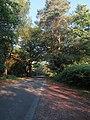 Road to Bolderwood (geograph 5833720).jpg