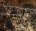 Rock under water (7c031e99113e45429e5e2ab3e667a846).JPG