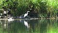 Rogue River Wildlife (15319361164).jpg