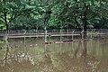 Roman Forest Flood Waters - 4-19-16 (26456830361).jpg