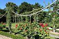 Rose garden @ Parc de Bagatelle @ Paris (28278487322).jpg