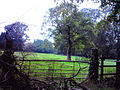 Rowtonmoor.jpg