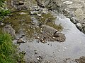 Ruisseau de Loverchy @ Parc du Val Vert @ Seynod (50884785121).jpg