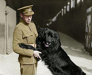 Sable Chief - Sable Chief, regimental mascot with his handler, Pte. Hazen Frazier, circa 1917