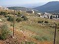 Safed Old Memetery-1.jpg