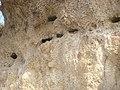 Sand Martin nests - digesvalereder - panoramio - Jens Cederskjold.jpg
