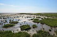 Schleswig-Holstein, Neufelderkoog, Biosphärenreservat Schleswig-Holstein Wadden Sea and adjacent areas NIK 7202.jpg