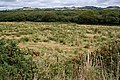 Scrubland and little-used Pasture - geograph.org.uk - 229078.jpg
