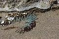 Sea anemone (41319650750).jpg