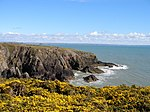 File:Sea cliffs and gorse along the Pembrokeshire Way - geograph.org.uk - 779460.jpg
