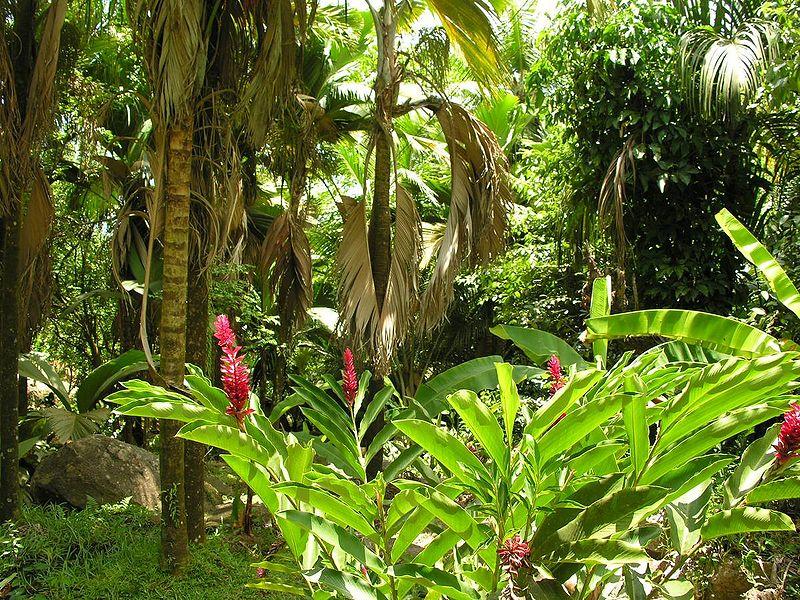 Растительный мир Индии. Леса. | Индия - страна мечты. | 600x800