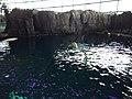 Shedd belugas 2017-09-02.jpg