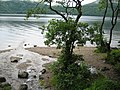 Shore of Loch Lomond - geograph.org.uk - 214938.jpg