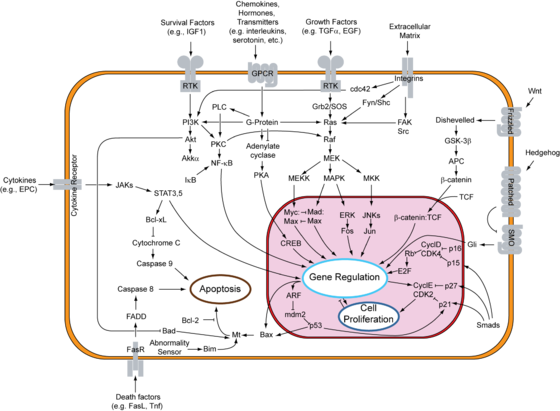 Overview of signal transduction pathways
