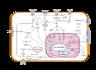 Signal transduction v1.png