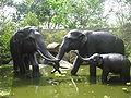Singapore Zoo 4.JPG