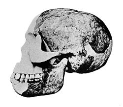 "Skull of the ""Eoanthropus Dawsoni"" (Piltdown Man) Wellcome M0013579.jpg"