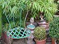Small backyard rue Gassendi.jpg