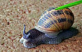 Snail - Close-up.jpg