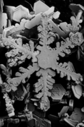Snow crystals 2.png