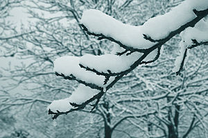 Snow on a branch