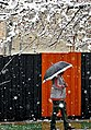 Snowy day of Tehran - 7 March 2013 03.jpg