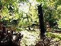 Soonwald - Urwald von morgen - panoramio (1).jpg