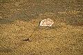 Soyuz TMA-08M landing (15).jpg