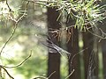 Spiderweb in Curonian Spit.jpg