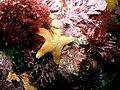 Starfish (4458718447).jpg