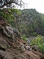Starr-050405-5886-Schinus terebinthifolius-habitat with Ken on rope-Keopuka-Maui (24114831124).jpg