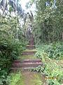 Steps to pond, upwords.JPG