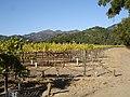 Sterling Vineyards, Napa Valley, California, USA.jpg