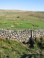 Stone Wall and Beck on Ling Gill Rigg - geograph.org.uk - 426714.jpg