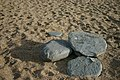 Stones on the sand - geograph.org.uk - 184221.jpg