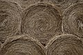 Straw bales (3572434809).jpg