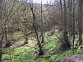 Stream, Abraham's Valley - geograph.org.uk - 407114.jpg