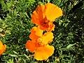 Strybing Arboretum - Flower7.JPG