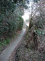 Studland , Churchyard Path - geograph.org.uk - 1712563.jpg