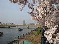 Sumidagawa -03.jpg