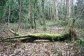 Sunninghill Woodland - geograph.org.uk - 762603.jpg
