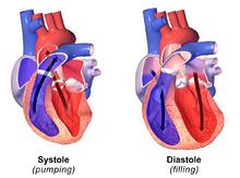 systole og diastole blodtryk