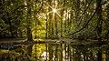 Szabadkígyós 2012-10-09, park, 500px photo (47753712).jpg