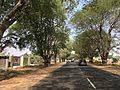 Tamarind highway DM.jpg