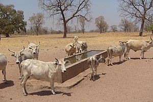 Tambacounda - A farm near Tambacounda.