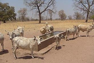 Tambacounda - A farm near Tambacounda.